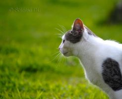 Cat Profile by mysteria-dl