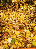 Farewell Autumn Leaves by Wonderer1000