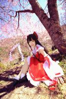 Reimu Hakurei_The Touhou Project by AMPLE-COSPLAY