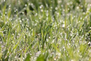Sparkling grass by JetteReitsma