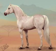 Ghost in the Desert by shilohs
