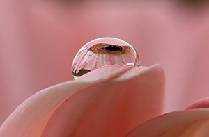 single drop by GemmaGreen