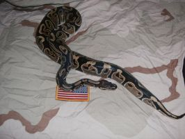 Patriot Snake 1 by DOGZOVWAR81