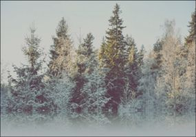 The Refrigerant Fog And Frosty Trees In The Forest by eskile