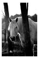 White Horse by Arcanacaries