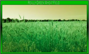 A Really Greeeen Wheat Field by Taures-15
