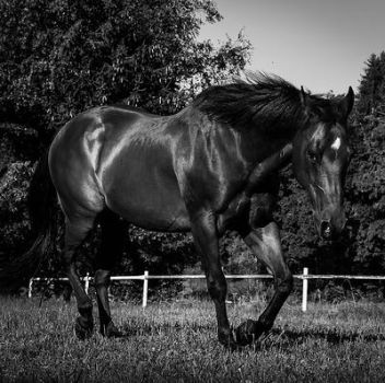 Fifty Shades Of Black by quicksilver1212