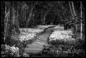 Bluebells in Black and White by grimleyfiendish