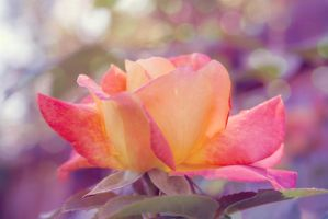 Rose by LoveJaa