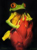 frog by Animal75Artist