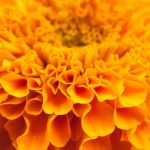Flower Close up by imladris517