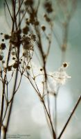 Dry Flowers 2 by rici66