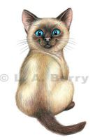Siamese Kitten Looks at You by bigcatdesigns
