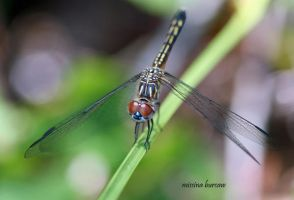 Dragonfly 2008-03 by Aries18o18