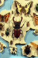 Lots of Bugs2 by NHuval-stock