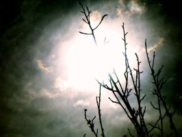 Sky and Branches by BelleDellaMorte