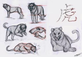 Tiger Studies by Autlaw