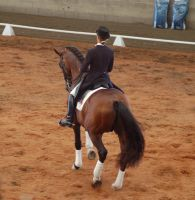 Horse stock - dressage 4 by Chunga-Stock