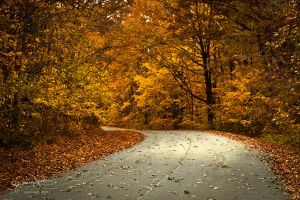 October Road I by AppareilPhotoGarcon