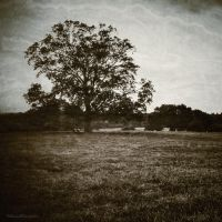 Tree by boldsoul