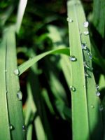Morning Dew by JMcCarty09