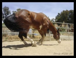 Turnabout- Sharys by Equine-Resource