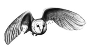 Barn Owl Tattoo Request by SemperFerus