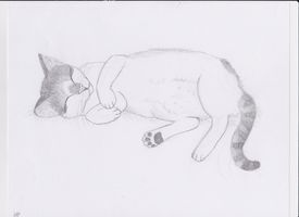 sleepy kitteh by Gingersnap821