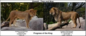 Zawadi...Then and Now by LoneWolfPhotography