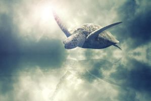If turtles could fly by RaffertyEvans