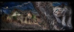 Abandoned House with Cat by Drchristophers