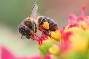 Bee at Work by ralfkaiser