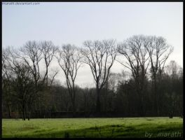The Trees Over There I by Miarath