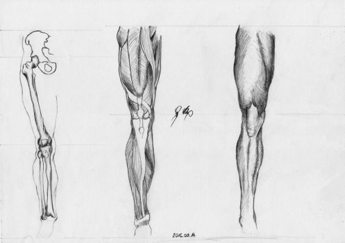 Leg front view Anatomy Practice by WeAreMeHUh