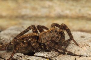 Resting Spider by cathy001
