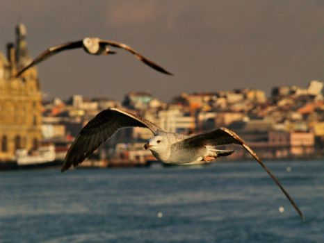 freedom and istanbul by Leo-Yigit-Ekiz