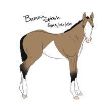 Lineage foal 1 SOLD by ShiningSparkRanch