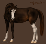 Gameela for CreeksideStables by Siocain