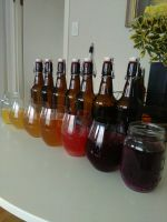 colours of the kombucha rainbow. by salvage24