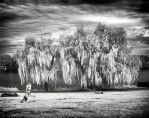 Willow Trees infrared by MichiLauke