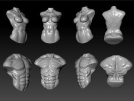 male and female torso study by kiister