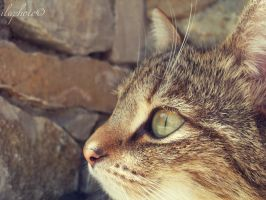 Beautiful eyes. by Lilith1995