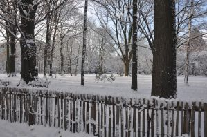 snow picture 1 by tuner7000