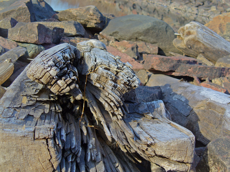 Logs by Grevian