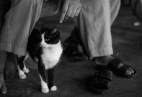 Poor Man's Cat by AbdoHad