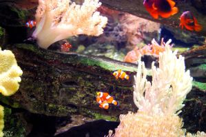 Sea Life 8 by Poet515