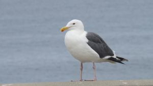 Seagull Stock - 3 by CNLGraphics