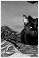 le chat charmant by velenux