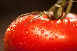Tomatoe #001 by ButteredCats