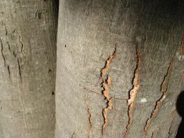 Split Bark by RosalineStock